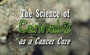 marijuana oil cancer